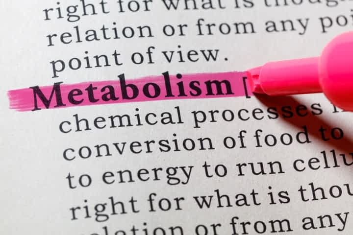 highlighted metabolism definition in dictionary